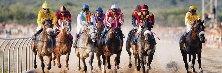 curses cavalls a fira gastronomica sènia