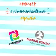 Concurs #PrimaveraMistralBonsai